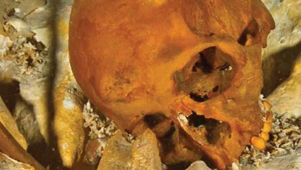 Naia's skull