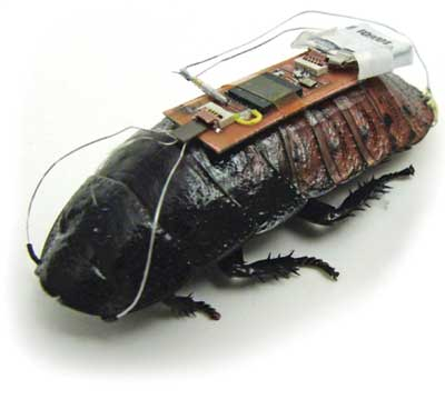 Cockroach biobots