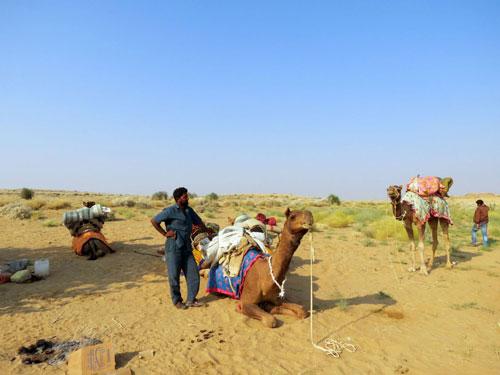 Camel rides in Jaisalmer
