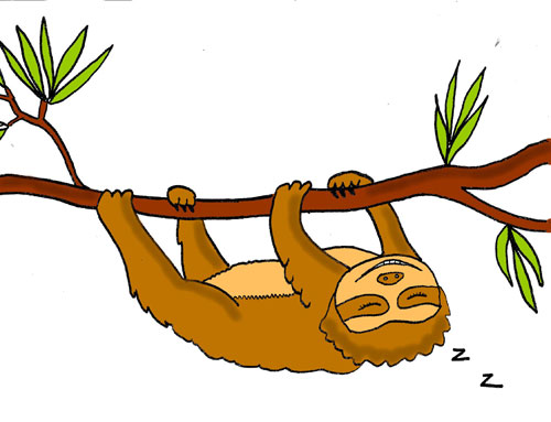 Sloth hanging upside down