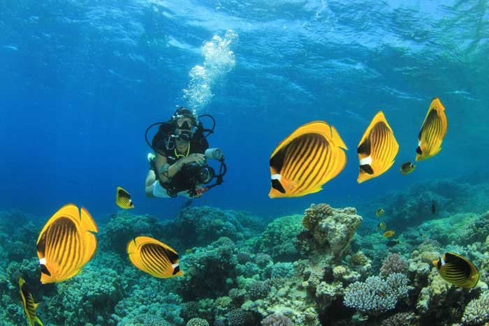 Diving in the Andamans Photo: © Infiniti Live Abroad