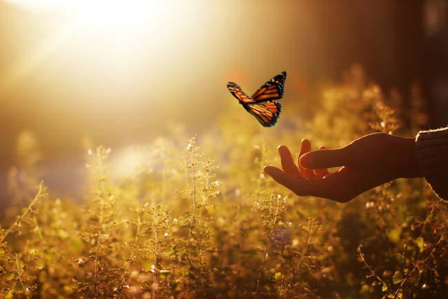 Hand releasing butterfly