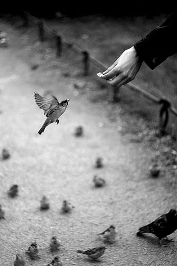 Handing feeding a sparrow