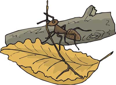 Worker ant on a leaf