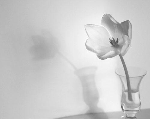 Single flower in a glass vase