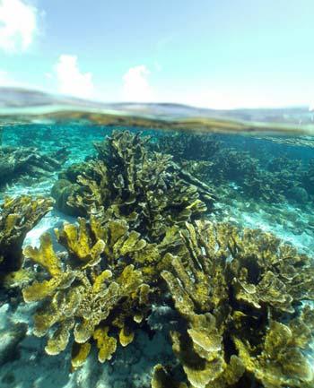 Corals pictured underwater