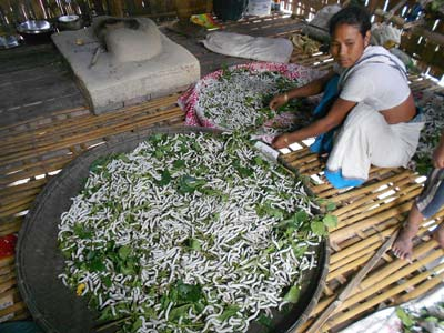 Traditional activity on Majuli Island