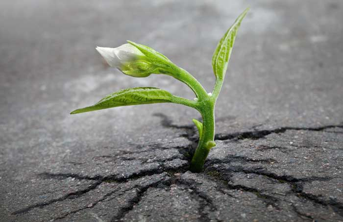 Plant sprouting out from cracked earth