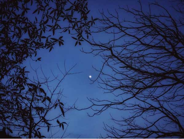 Moon seen through bare branches of trees at night