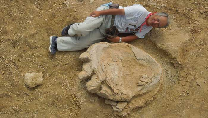 Japanese scientist lies down near the Titanosaur fossil footprint