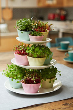 Muffin cups used as planters