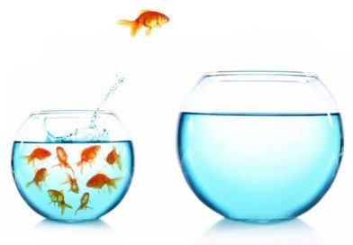 A goldfish jumps from a bowl full of goldfish to another empty bowl of water