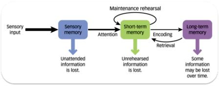 Revision memory model