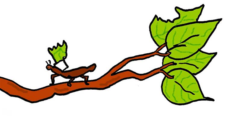 A leaf cutter ant carrying a leaf across a branch of a tree