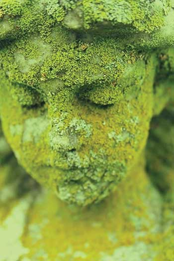 Moss on statue