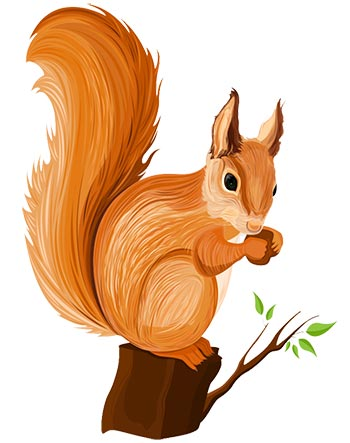 Illustration of squirrel on a tree branch