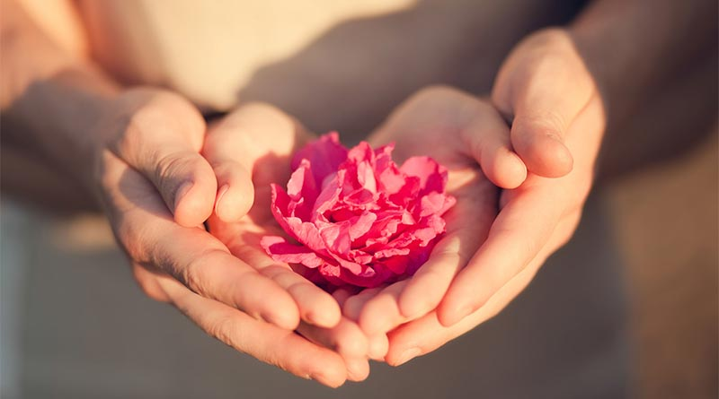 Two pairs of hands holding a pink flower together