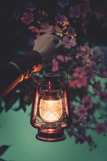 Hand holding lamp near flowers