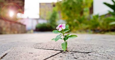 Flower growing out of crack in the sidewalk