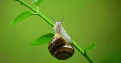 Snail climbing up the stem of a plant