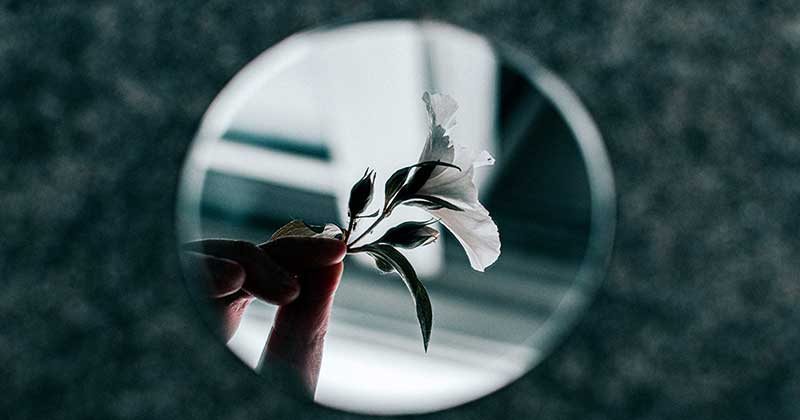 White petalled flower reflected in a mirror