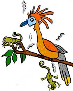 Illustration of hoatzin bird