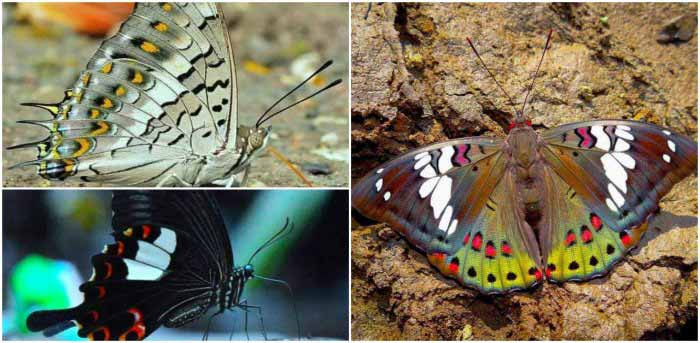 Butterflies of Matheran