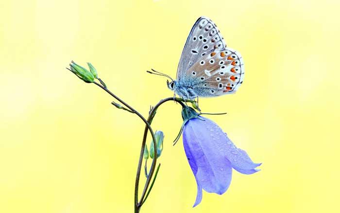 Butterfly sitting on a purple flower