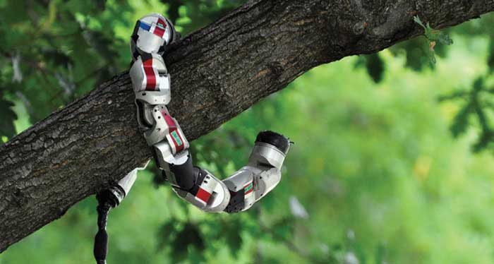 Snakebots coiled around a tree branch