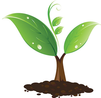Illustration of a sapling