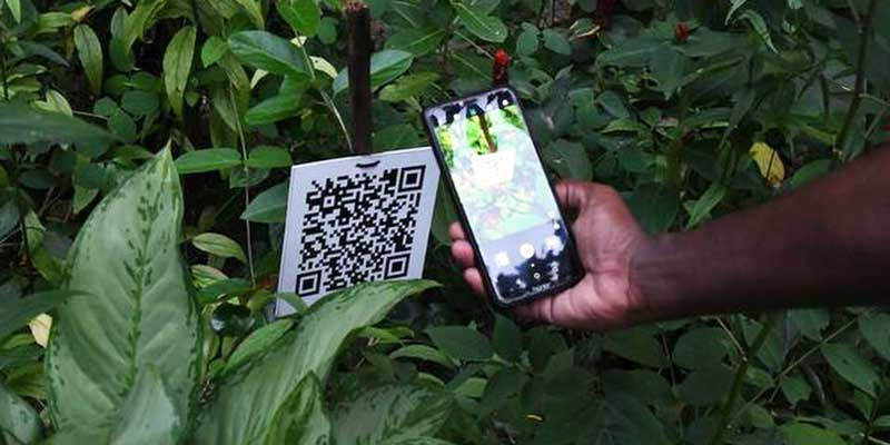 Smartphone scanning a QR code on a tree