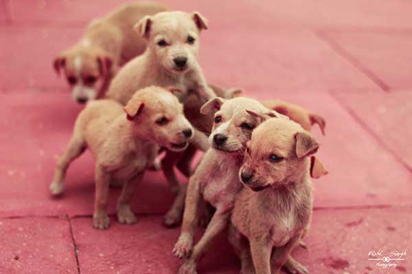 Cute puppies in a line