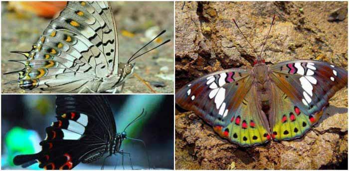 Butterflies of Matheran