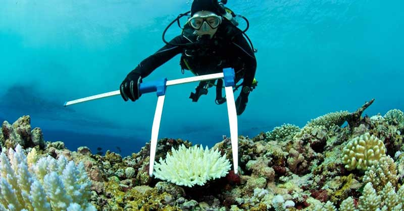 A marine biologist studying a coral reef underwater