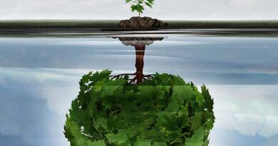 Reflection of sapling as a tree in the water signifying potential